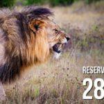 IRPF – 10 coisas que você precisa saber antes de encarar o leão em 2019