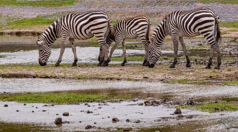 deu zebra no jogo do bicho